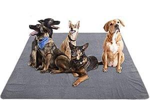 Empapadores reutilizables para perros grandes - Yangbaba