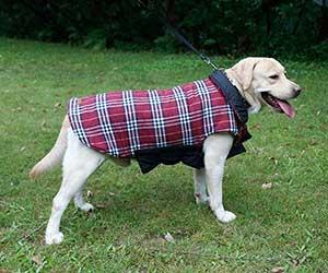 Chaqueta para perros reversible y con estilo de cuadros escoceses - YouthUnion