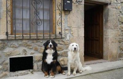 Casa de Aldea el Sol casa rural pet friendly en Asturias