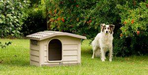 Caseta estilo bungaló para perros pequeños y medianos - Bama