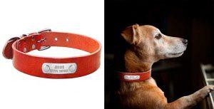 Collar para perros de cuero y personalizado - BERRY