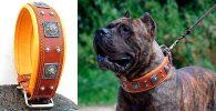 Collar de cuero tachonado para perros grandes - Bestia Dog Gear Eros