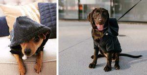 Sudadera con capucha para perros - Ellie Dog Wear