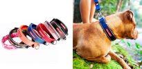 Collar de neopreno para perros - EzyDog Neo