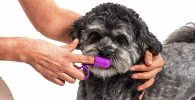 Cepillo de dientes de dedo para perros - Hazara