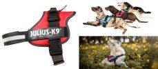 El arnés para perros más popular del mercado - Julius-K9