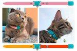 Collar para gatos hipoalergénico, transpirable y resistente al agua - Kittyrama