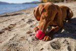 Kong Ball Classic: pelota para perros adultos muy resistente