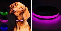 Collar luminoso con luz LED para perros - MASBRILL