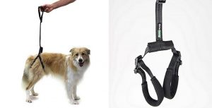 Ortocanis-Arnes-de-cadera-para-perros-con-displasia-o-movilidad-reducida