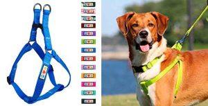 Arnés barato y reflectante para perros - Pawtitas