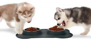 Comedero doble para gatos y perros - Pecute