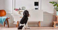 Cámara para mascotas con dispensador programable de golosinas - Petcube Bites