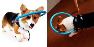 Arnés especial para perros ciegos o con problemas de visión - RUNMIND
