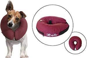Collar isabelino inflable para perros y gatos - iCollr
