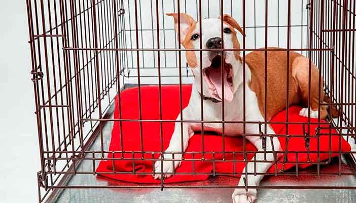 Jaulas metálicas para perros