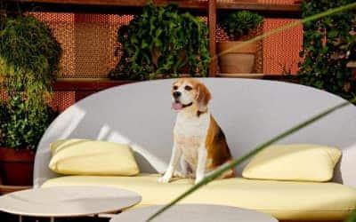 Kimpton Vividora hotel que acepta mascotas en Barcelona