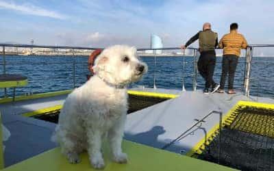 Paseo en catamaran por Barcelona
